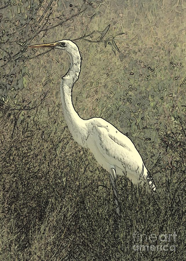 Hidden Egret Photograph