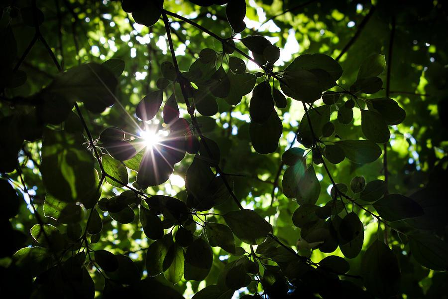 Hidden Star Photograph