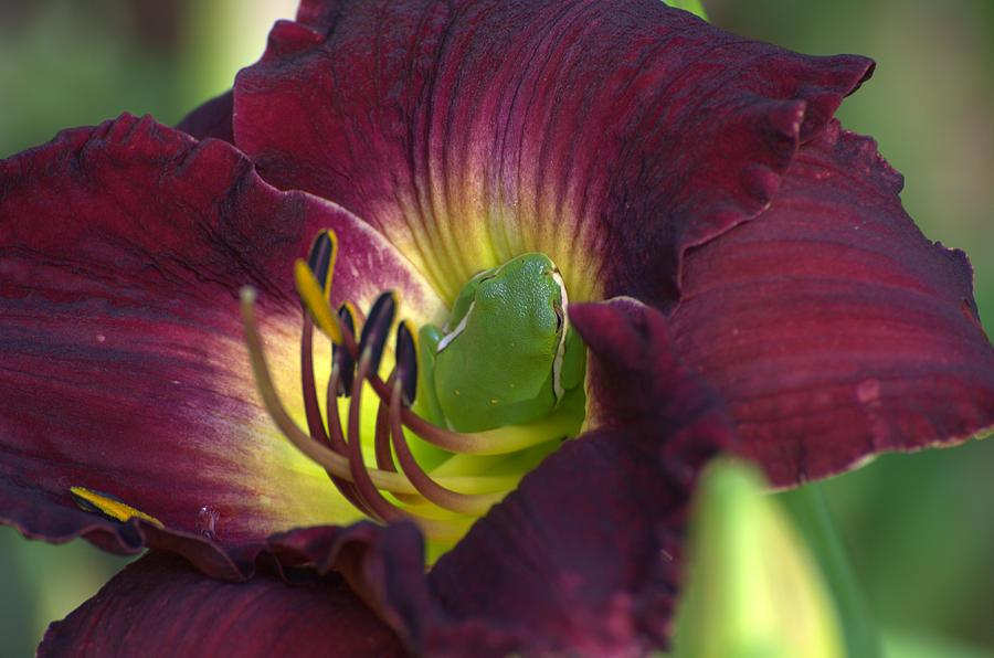 Tree Frog Photograph - Hidden Treasures by Jodi Terracina