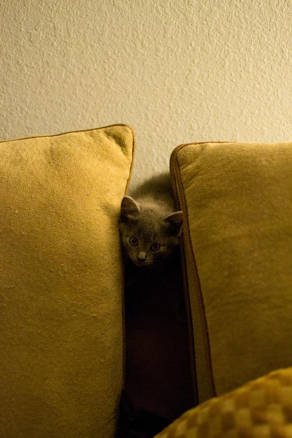 Kitten Photograph - Hide And Seek by Matt Radcliffe