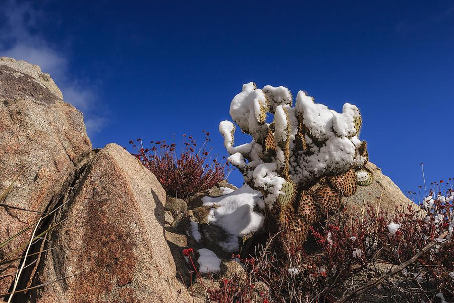 Cactus Photograph - High Desert Snow 2 by Scott Campbell