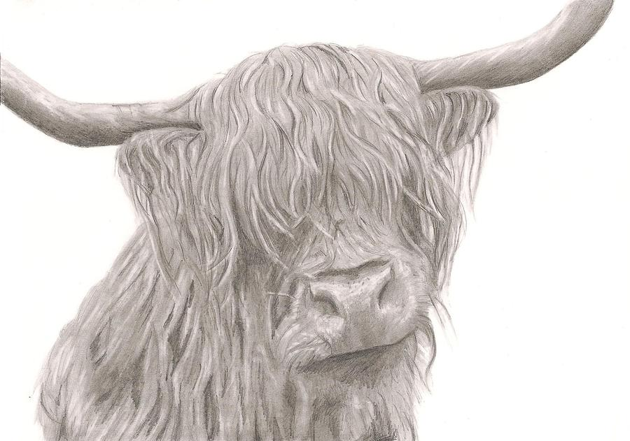 Highland cow by rebecca vose