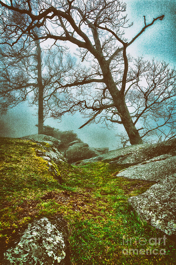 Hiking In The Fog - Blue Ridge Mountains II Painting