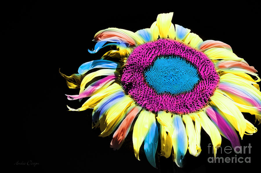 Hippie Sunflower Rainbow Painterly Photograph