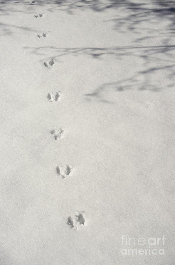 Snow Photograph - Hippity Hop by Deborah Smolinske
