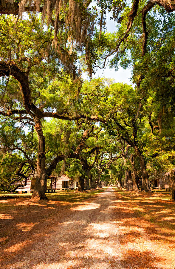 Evergreen Plantation Photograph - Historic Lane 2 by Steve Harrington