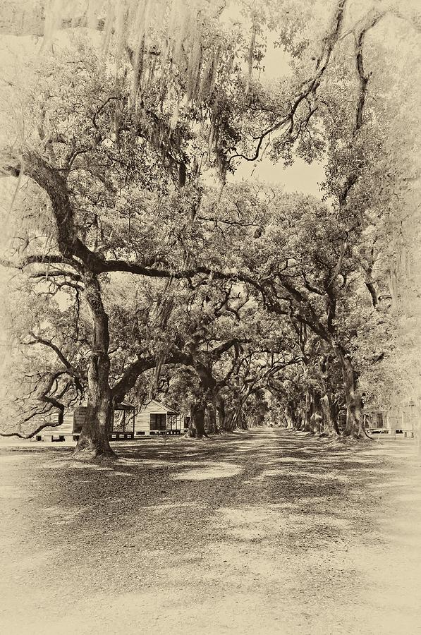 Historic Lane Antique Sepia Photograph