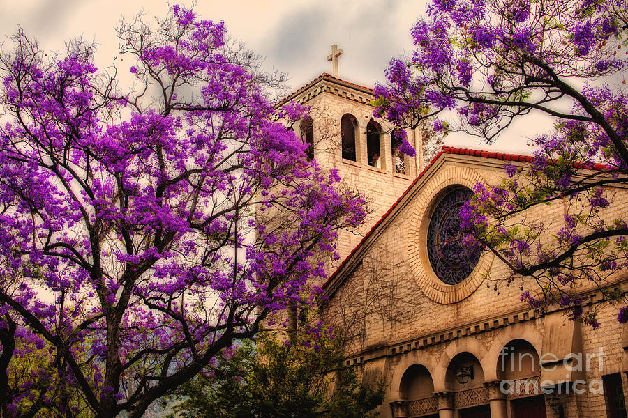 Historic Sierra Madre Congregational Church Among The Purple Jacaranda Trees Photograph - Historic Sierra Madre Congregational Church Among The Purple Jacaranda Trees  by Jerry Cowart