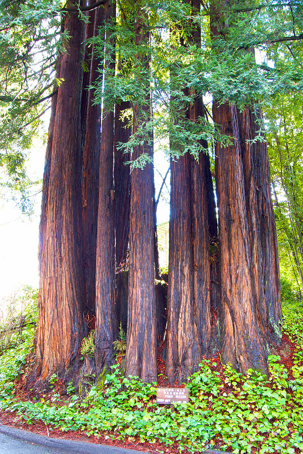 redwood valley chat Redwood valley's directory of alcohol treatment centers and drug addiction centers for addiction rehab and detox treatment centers directory of redwood valley, ca.