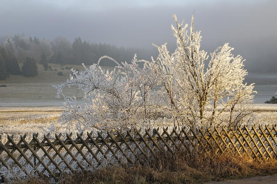 Hoarfrost In Winter Photograph