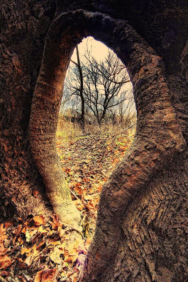Landscapes Photograph - Hobbitt Vip Entrance by Robert McCubbin