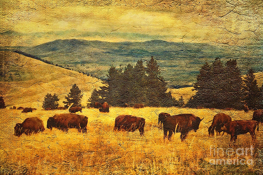 Home On The Range Digital Art  - Home On The Range Fine Art Print