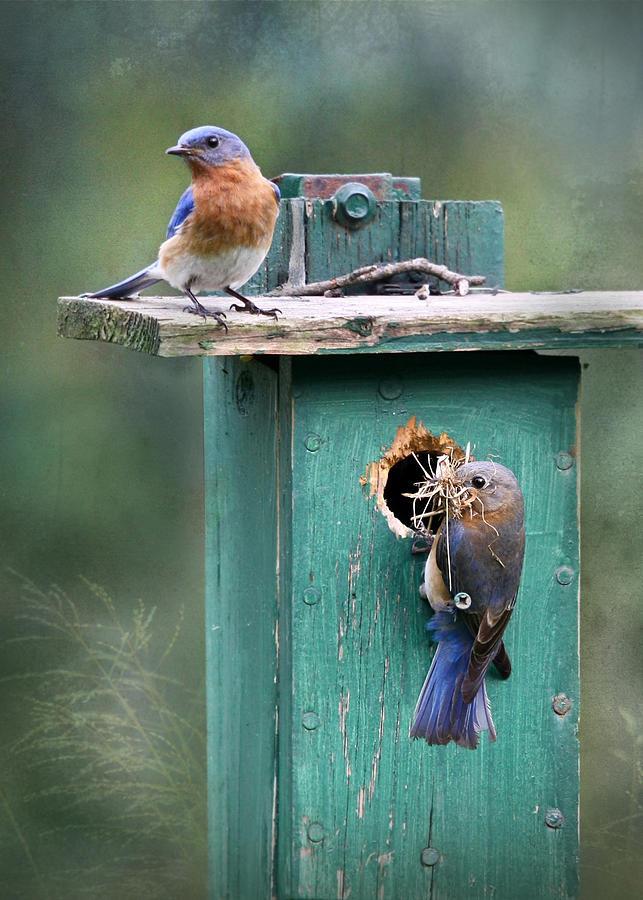 Bird Photograph - Home Sweet Home by Lori Deiter