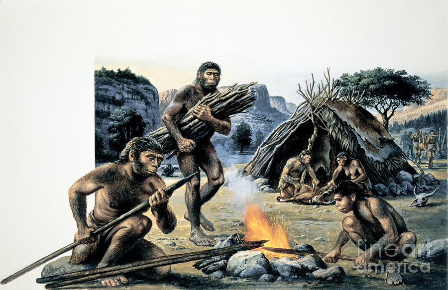 Homo Erectus Photograph By Publiphoto