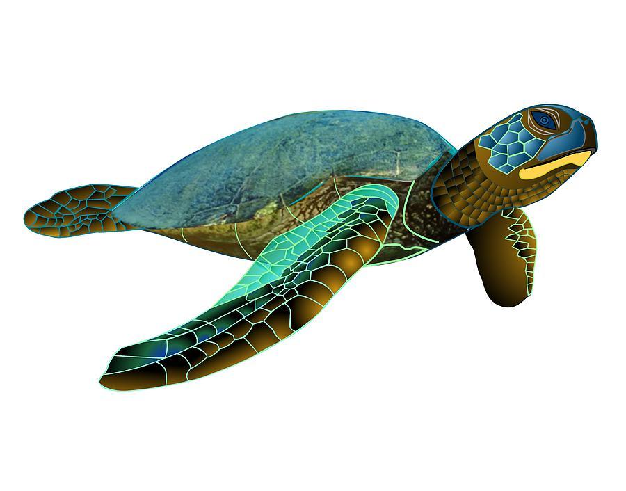 Green Sea Turtle Shell...