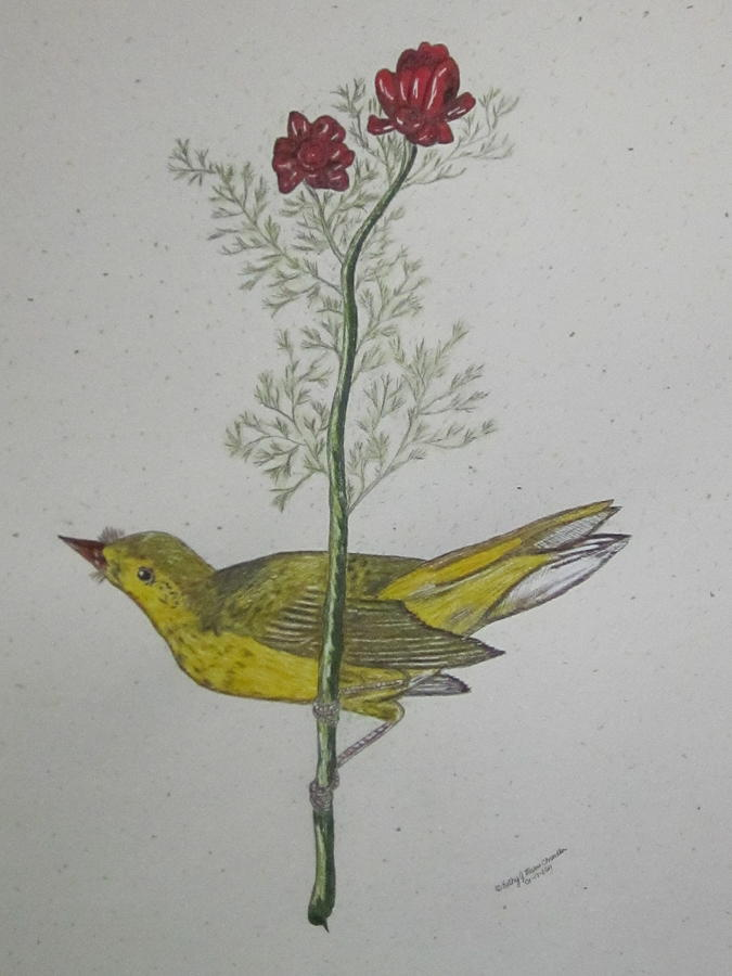 Hooded Warbler Painting