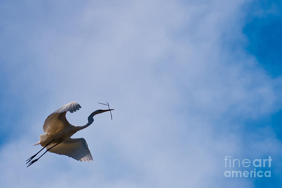 Egret Photograph - Hopeful Egret Building A Home  by Terry Garvin