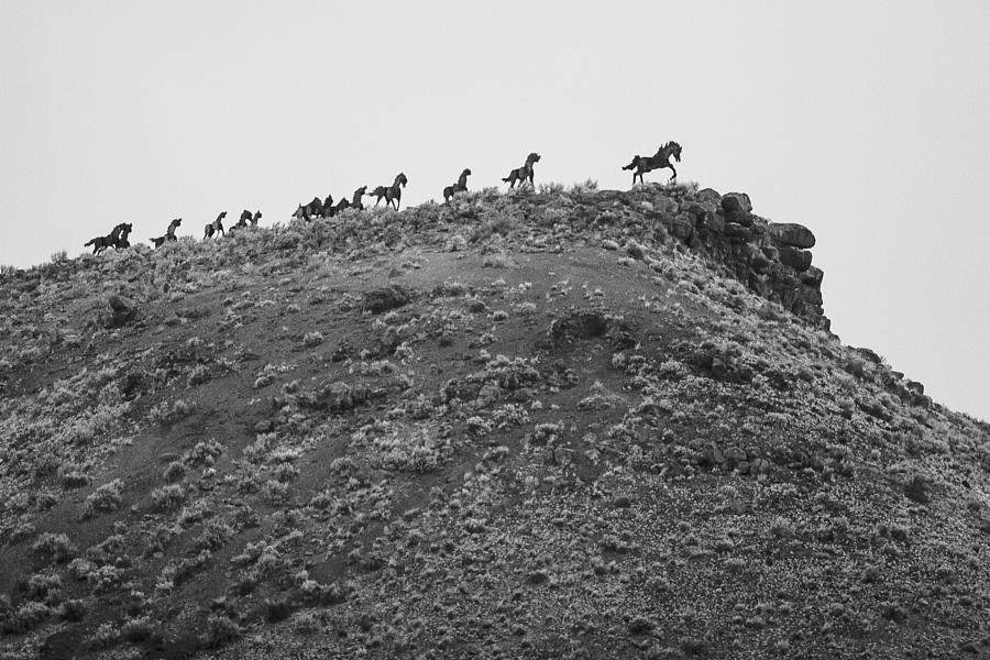 Horizon Horse Photograph