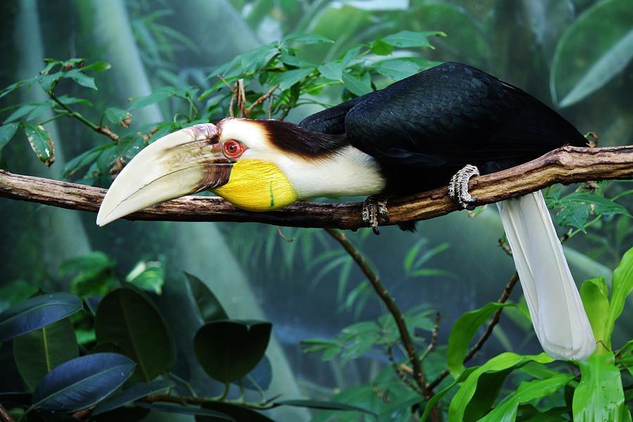 Hornbill Photograph