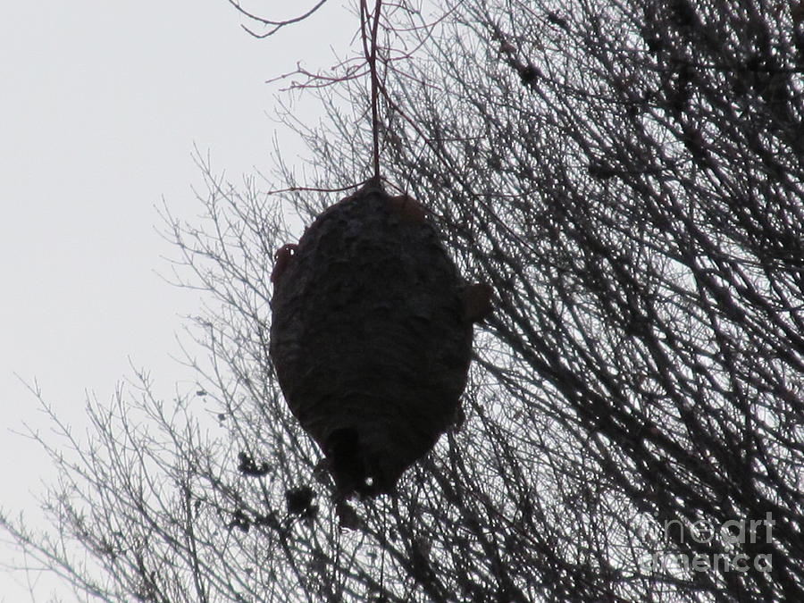 Hornets Nest West Photograph