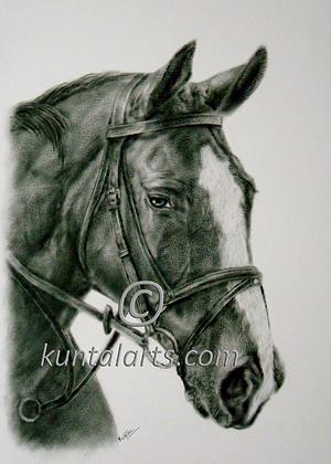 Portrait Mixed Media - Horse 2 by Kuntal Chaudhuri