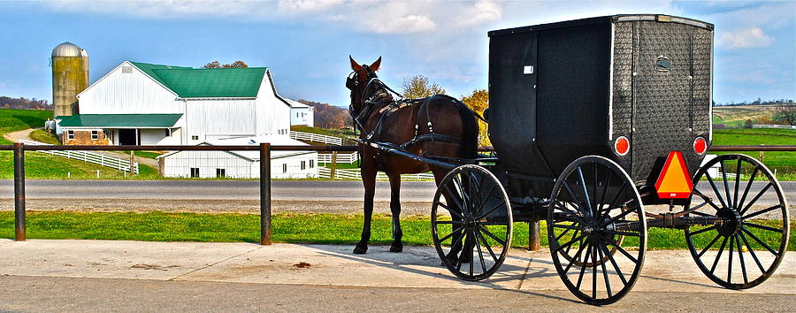 Horse And Buggy And Farm Photograph