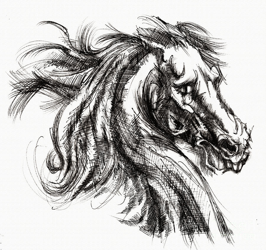 Horse Face Ink Sketch Drawing