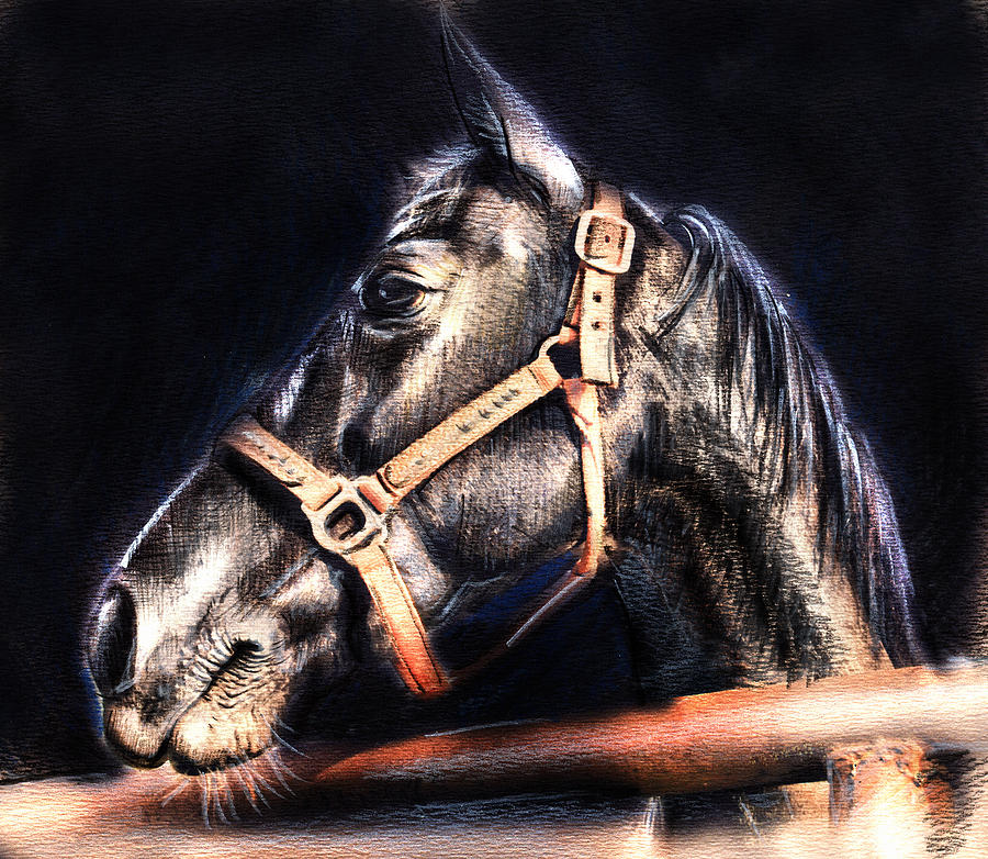 Horse Face - Pencil Drawing Drawing  - Horse Face - Pencil Drawing Fine Art Print