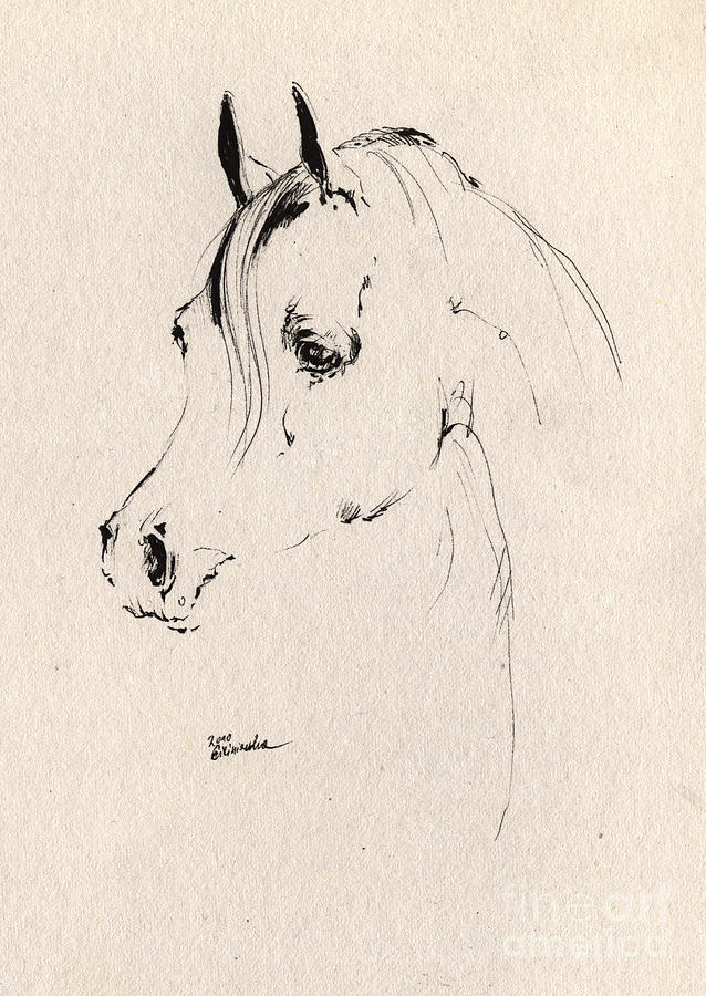 Horse Head Sketch Drawing  - Horse Head Sketch Fine Art Print
