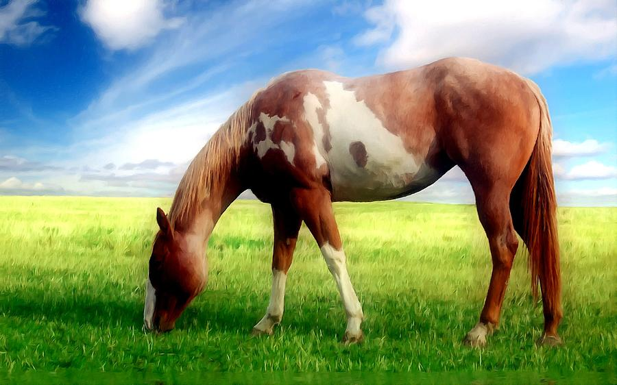 Horse Is Grazed On Meadow Painting  - Horse Is Grazed On Meadow Fine Art Print