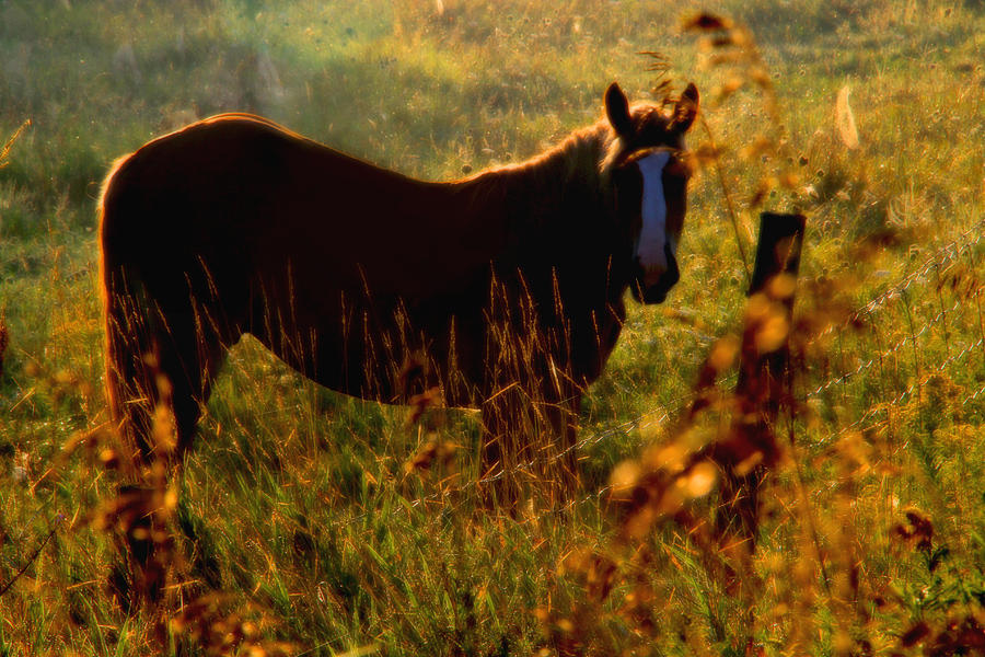 Photo Photograph Horse Silhouette Rural Animal Canvas Acrylic Metal Photograph - Horse by Jim Vance