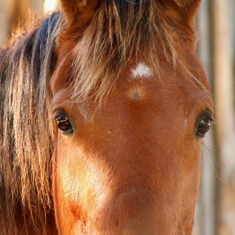 Horse Look Photograph