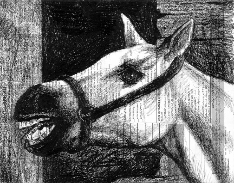 White Drawing - Horse by Mark Zelmer