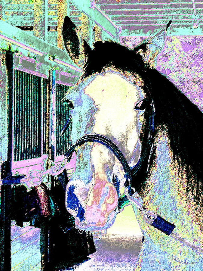 Horse Of Many Colors Photograph