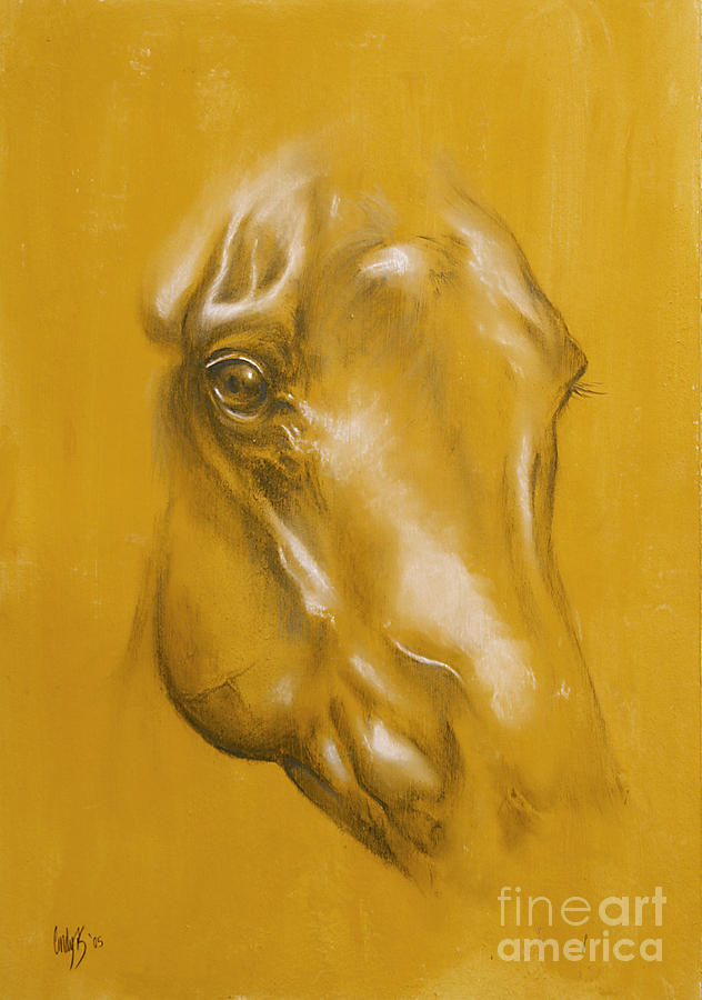 Horse Portrait Drawing