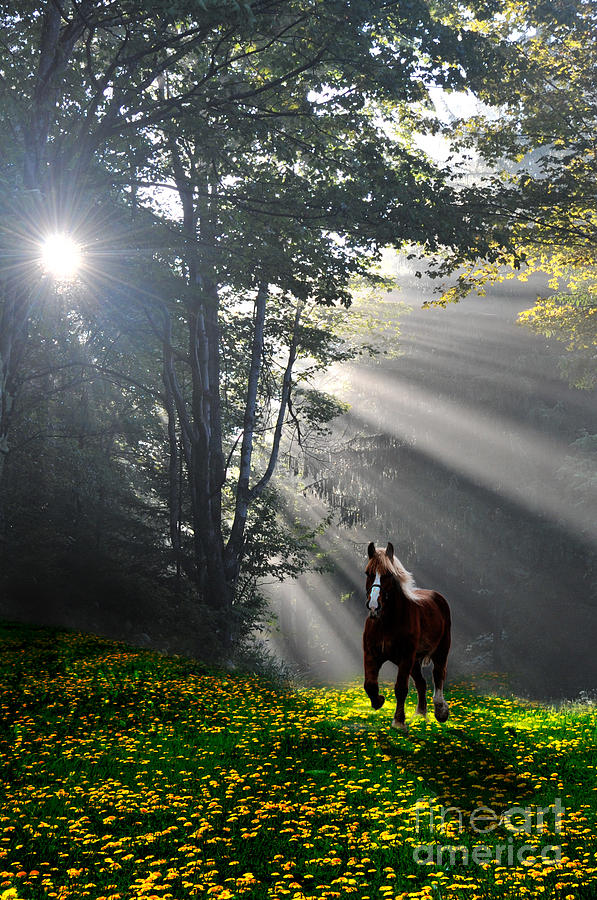 Horse Photograph - Horse Running In Dandelion Field With Streaming Sunlight by Dan Friend
