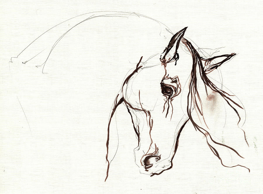 Horse Sketch Painting