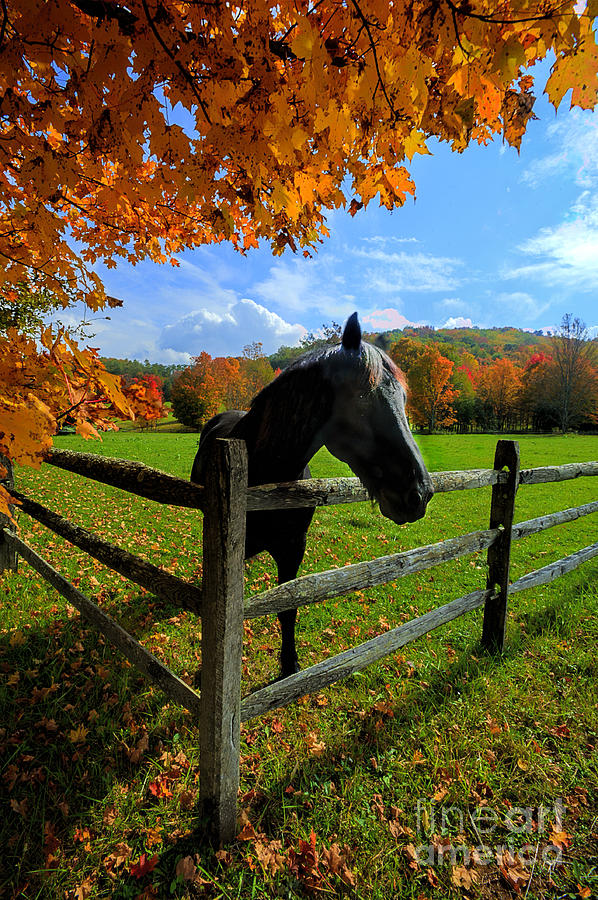 Horse Under Tree By Fence Photograph