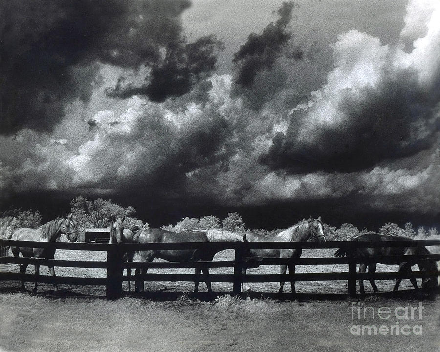 Horses Black And White Infrared Stormy Sky Nature Landscape Photograph  - Horses Black And White Infrared Stormy Sky Nature Landscape Fine Art Print