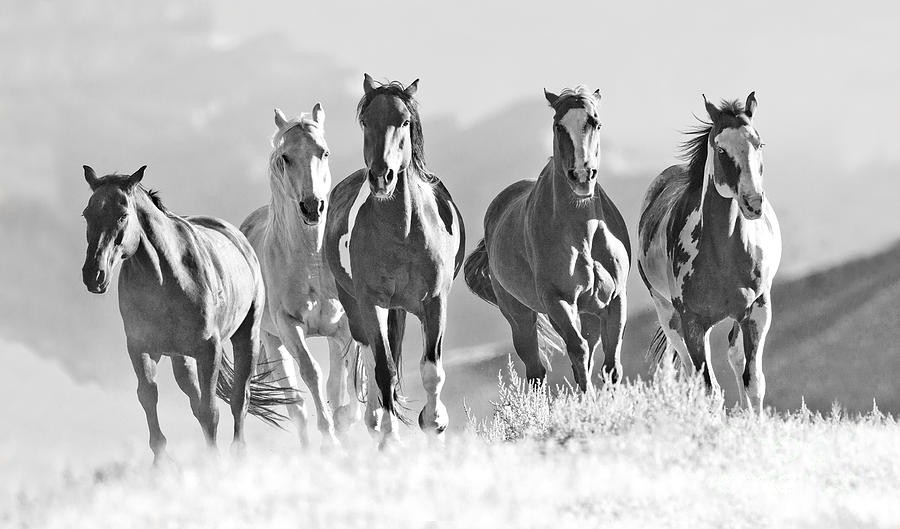 Horses Crest The Hill Photograph