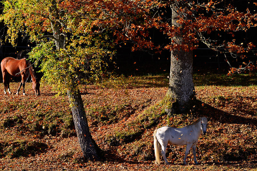 Horses In The Autumn is a photograph by Toppart Sweden which was ...
