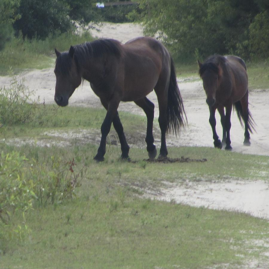 Horses Of Corolla 8 Photograph  - Horses Of Corolla 8 Fine Art Print
