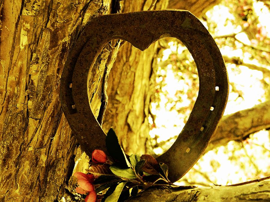 Horseshoe Love Photograph  - Horseshoe Love Fine Art Print