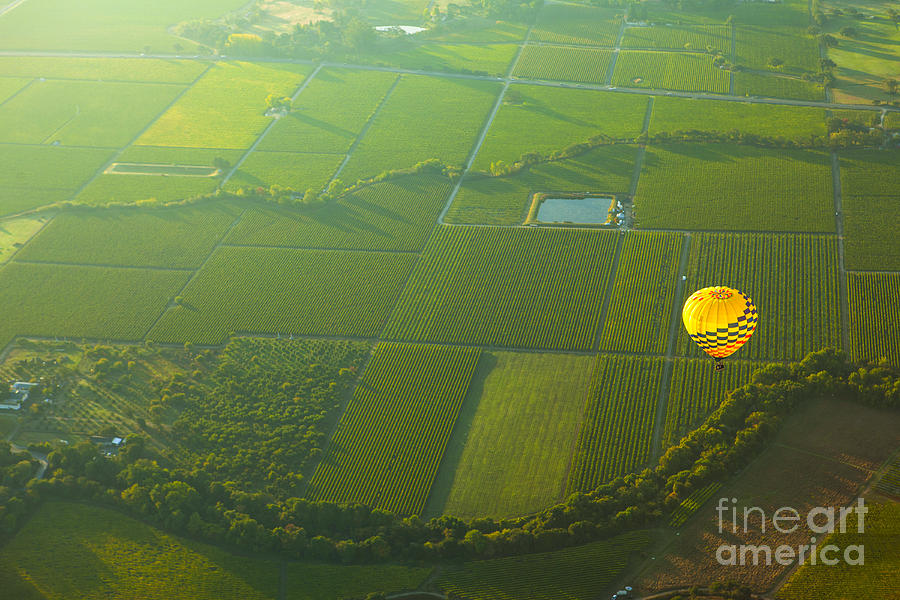 Hot Air Balloon Over Napa Valley California Photograph  - Hot Air Balloon Over Napa Valley California Fine Art Print
