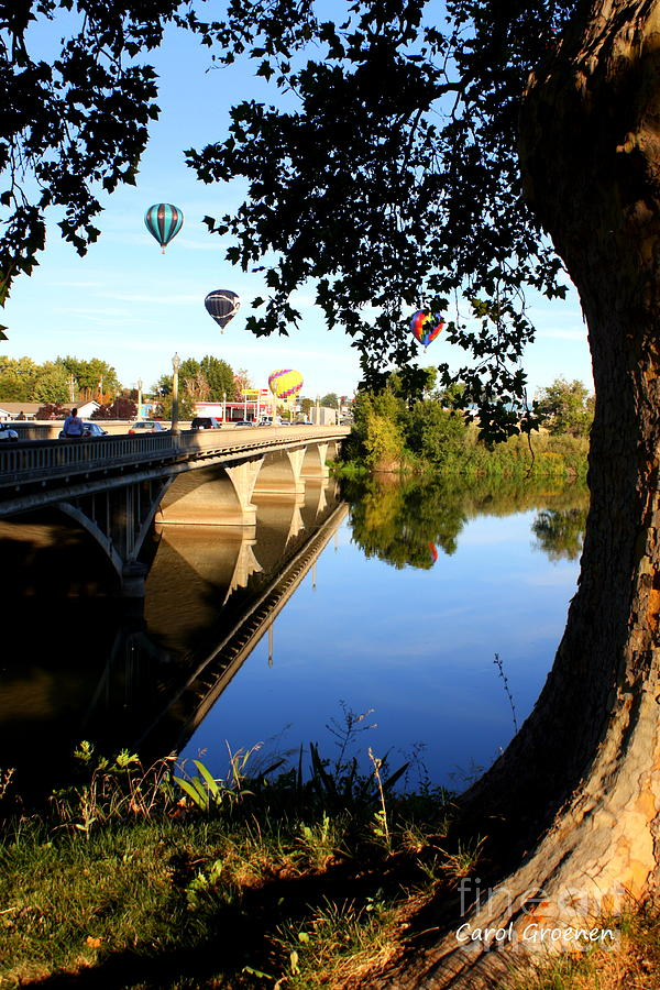 Hot Air Balloons Through Tree Photograph