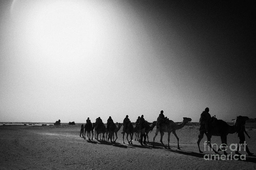 hot desert sun beating down on camel train in the sahara desert at Douz Tunisia Photograph