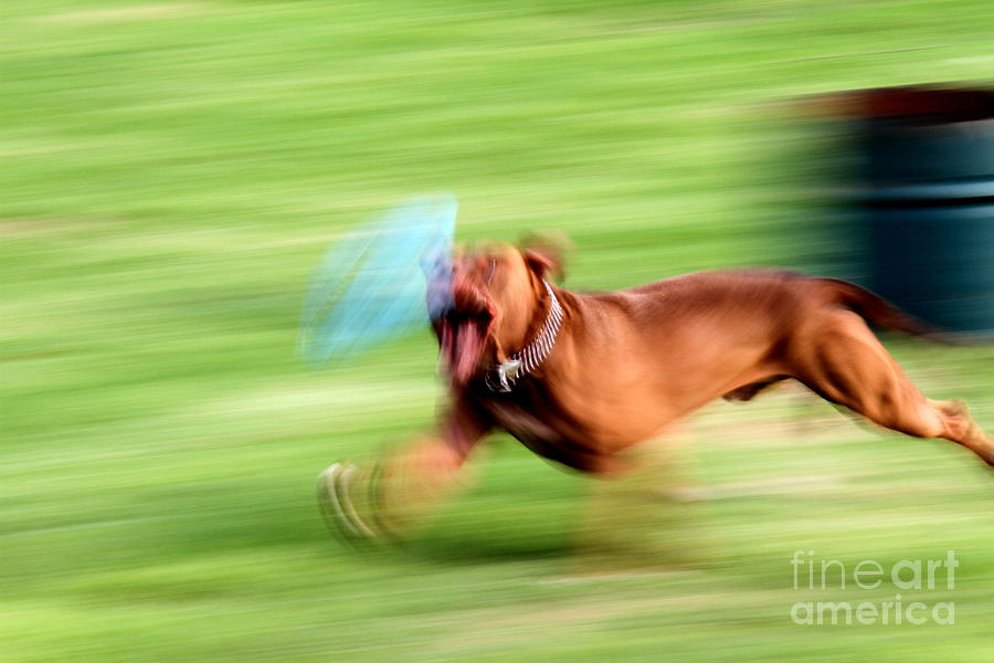 Hot Dog Photograph  - Hot Dog Fine Art Print