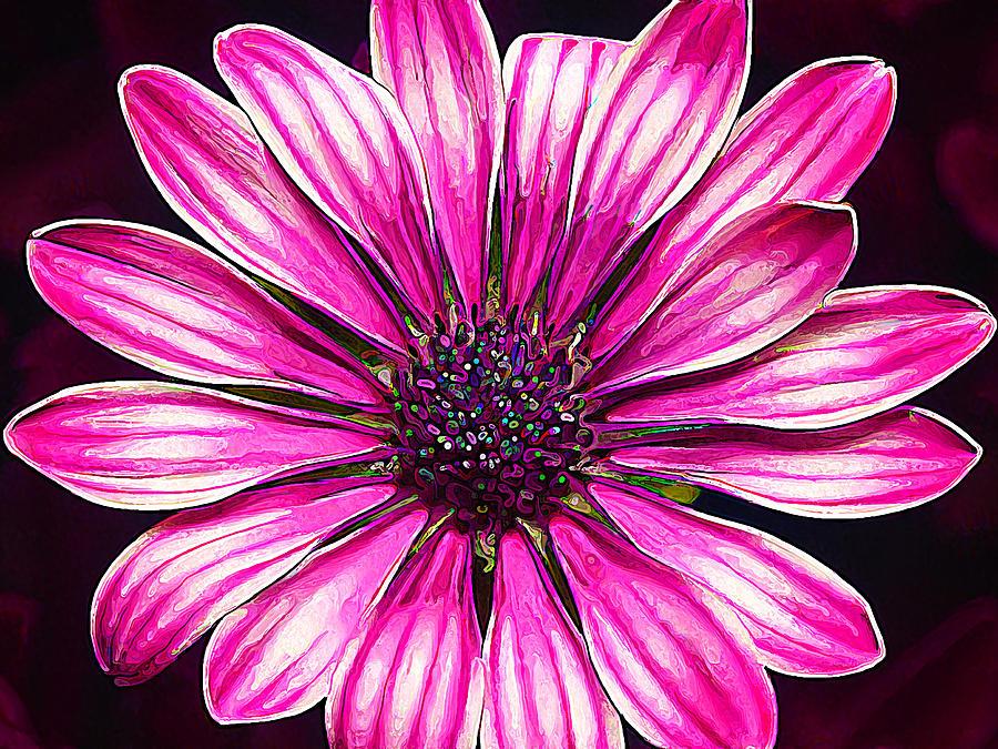 Hot Pink Daisy Digital Art