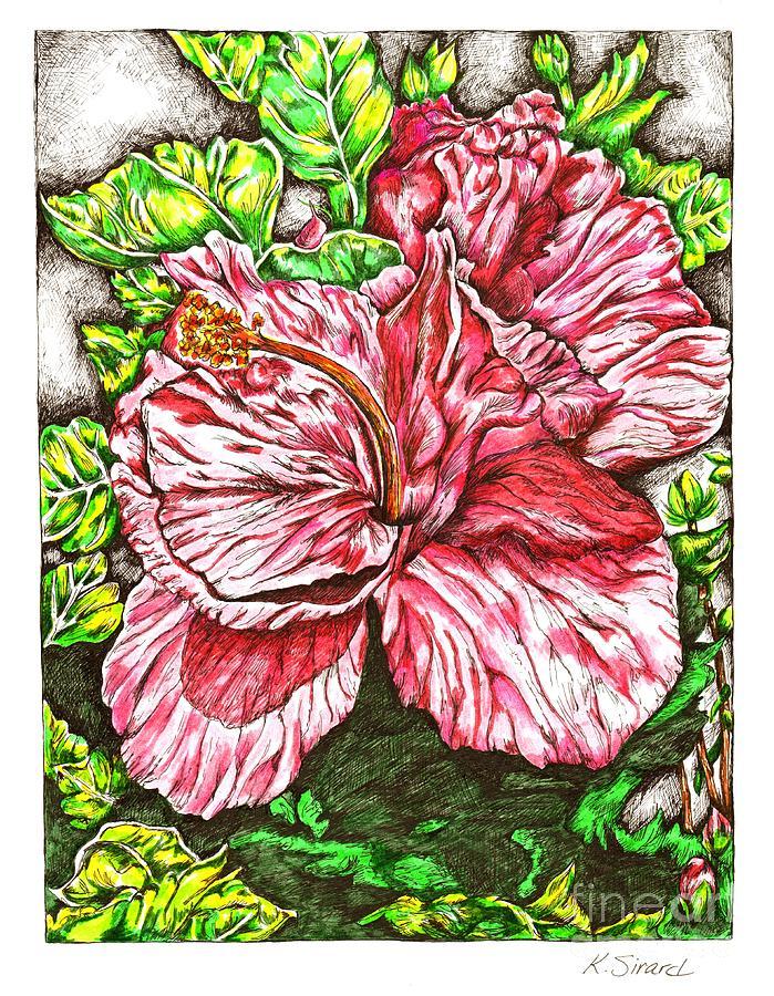 Hot Pink Hibiscus Flower Drawing by Karen Sirard
