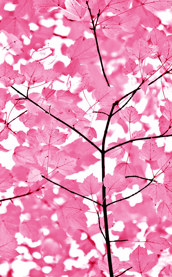 Hot Pink Leaves Melody Photograph